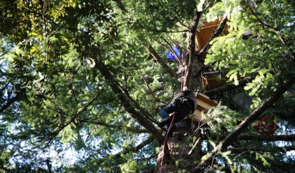 Stationed on wooden platforms and rope lines 100 feet in the air, members of the group Cascadia Forest Defenders are protesting what they claim is a clear cut of native forest. The logging is part of a pilot project designed to mimic nature.