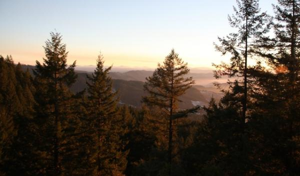 The White Castle timber sale near Roseburg, Ore., by the U.S. Bureau of Land Management has pitted environmentalists against forestry professors in a new debate over the management of Pacific Northwest forests.