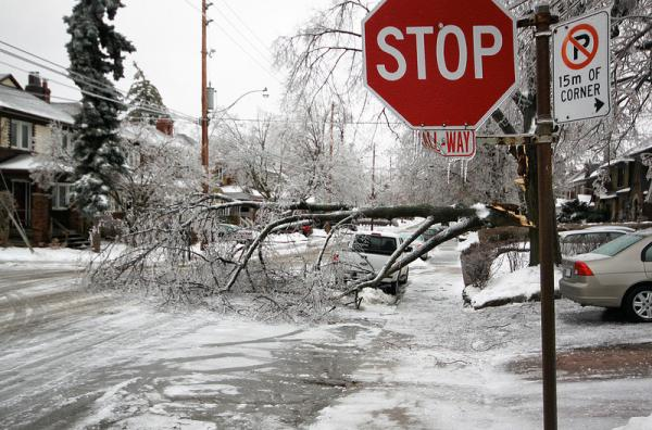 Toronto in the aftermath of the storm an ice storm downed trees and brought single digit temperatures  to Canada and parts of Michigan, Vermont and Maine(Roozbeh Rokni/Flickr)
