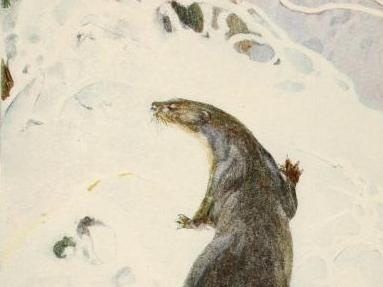 Paul Bransom's illustration from a 1913 edition of <em>The Wind in the Willows </em>shows Otter traveling through the snowy woods.