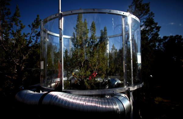 The temperature inside this tree chamber is about 7 degrees hotter than outside — roughly the increase predicted by computer models of climate change over the next 80 years or so.