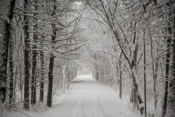 Snow sticks to the trees along Levee Road during a winter storm in December of 2012 in Baraboo, Wisconsin.