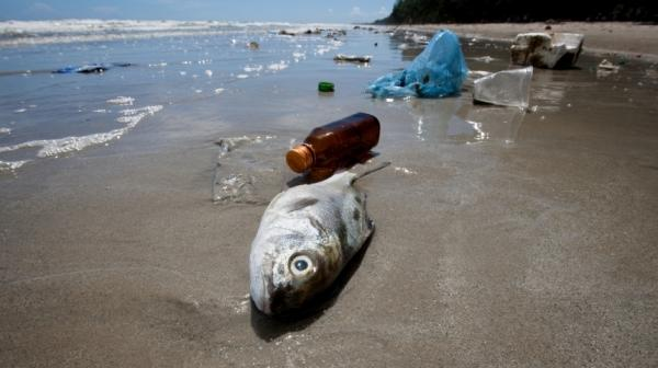 """""""A lot of people are eating seafood all the time, and fish are eating plastic all the time, so I think that's a problem,"""" says a marine toxicologist."""