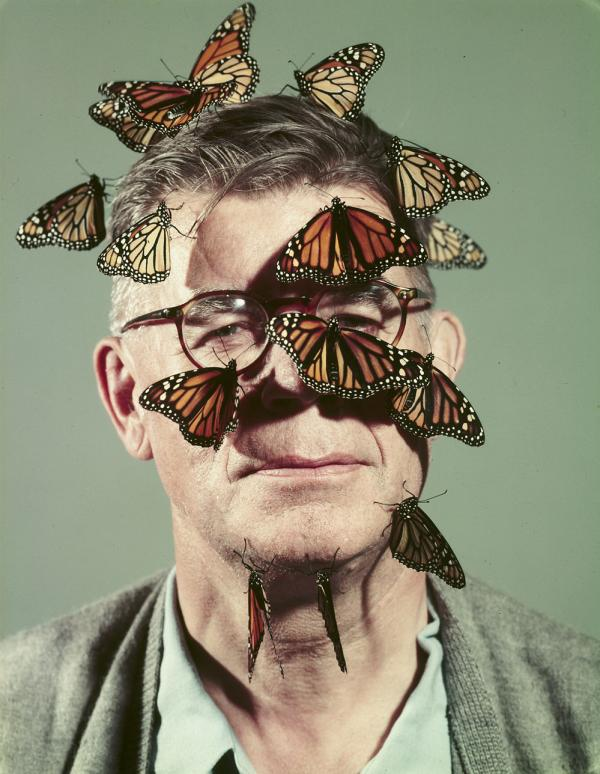 Butterfly breeder Carl Anderson with monarch butterflies on his face, 1954