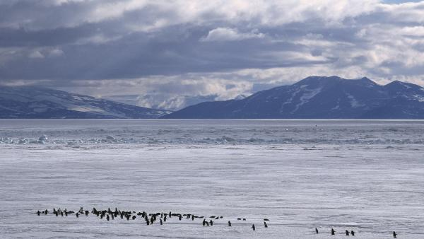 Adelie penguins dot the landscape. These penguins often approached early polar explorers with little trepidation, only to wind up as dinner.