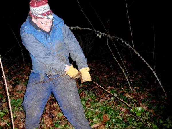 Kevin Head goes on daily pre-dawn missions to remove the invasive English ivy. (Tom Banse/Northwest News Network)