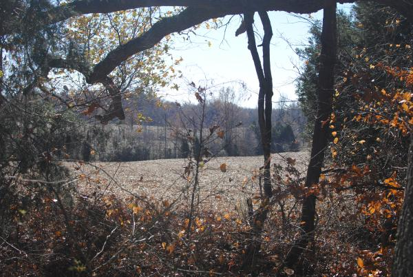 A view of some of the land that could be mined, as seen from the Pennyroyal Girl Scout Camp.