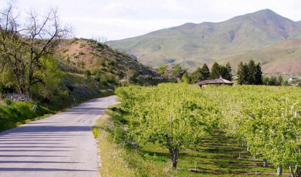 The Valley between Wenatchee and Leavenworth, Wash., is known for its fruit orchards. Orchardists worry a designated bikeway would bring lawsuits from cyclists and cause hassles with their workload. Cyclists want a safe route between the two cities.