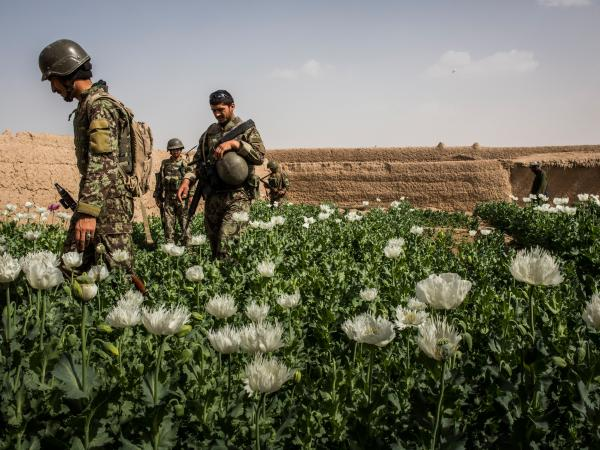 Soldiers in the Afghan National Army's 6th Kandak (battalion), 3rd company, search a local farmer's poppy field during a joint patrol with U.S. forces in Kandahar province in March of last year.