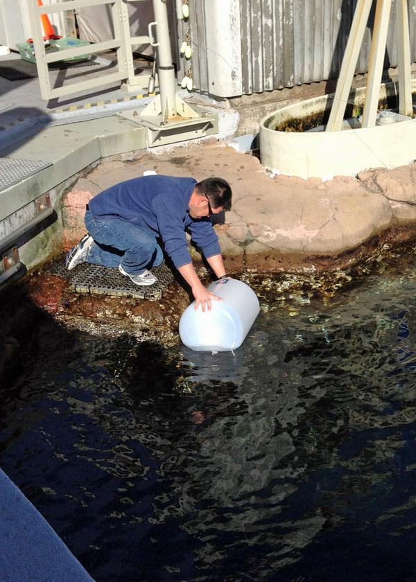 Study co-author Kevan Yamahara collects a water sample at the Monterey Bay Aquarium.