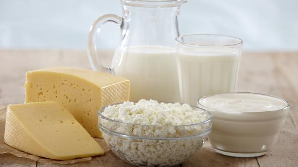 A new study on lactose tolerance among early farmers in Spain challenges a leading theory that humans developed an appetite for milk to avoid calcium deficiency.
