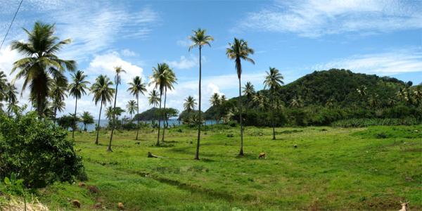 The landscape along Dominica's eastern coast is not a place you would expect to find many cross country skiers.