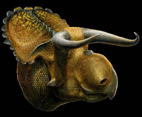 An artist's image of Nasutoceratops titusi.