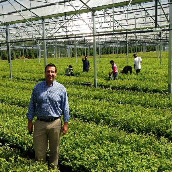 Cort Brazelton, of Fall Creek Nursery near Eugene, Ore., shows off his new greenhouse, carpeted with small blueberry plants and nearly ready for export to Mexico and Peru.