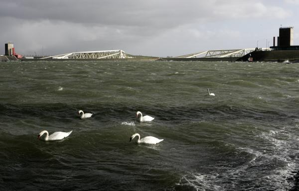 Swans pass in front of the closed Maeslant Barrier gates in the Netherlands, in November, 2007. Similar gates have been proposed to protect Manhattan from rising seas.
