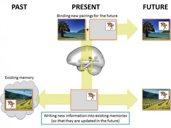 The researchers used scenes like this to test memory. When an object's location and a background scene are presented together, they are remembered as a whole event (top). But when new information is presented, like a new location for the small object, that new location is tied to the old scene (bottom).