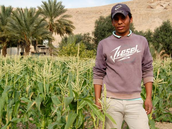 Oday Mah-Sayyid, a Palestinian who works as a laborer on an Israeli date farm in the Jordan Valley.