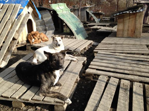 The Center to Protect Animals, an animal rights organization, operates a makeshift shelter on Sochi's outskirts. The group's volunteers are finding and housing as many strays here as they can, including Simba, the dog at front.