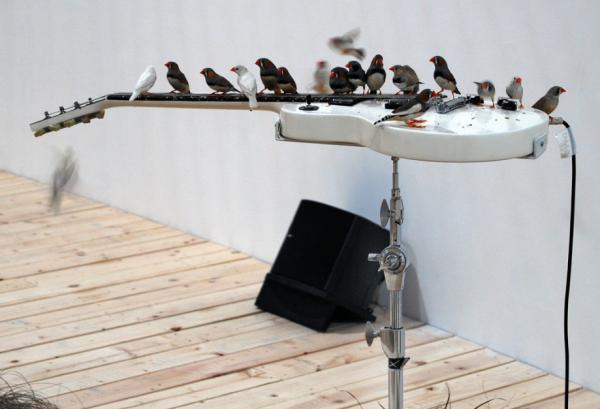 Céleste Boursier-Mougenot's sonic installation introduces a flock of 70 Zebra Finches to Gibson Les Paul and Thunderbird bass guitars. (www.pem.org)