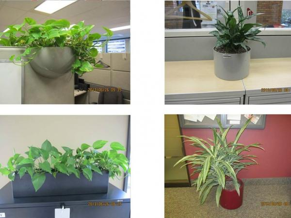 "Plants for auction on <a href=""http://gcsurplus.ca/mn-eng.cfm"">GCSurplus</a>, the Canadian Government's site for the sale of surplus goods. Plants from the House of Commons may soon join them."