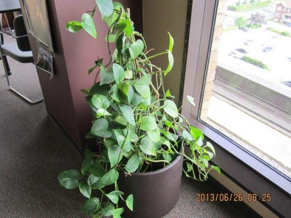 "Plants for auction at <a href=""http://gcsurplus.ca/mn-eng.cfm"">GCSurplus</a>, the Canadian Government's site for the sale of surplus goods. Plants from the House of Commons may soon join them."
