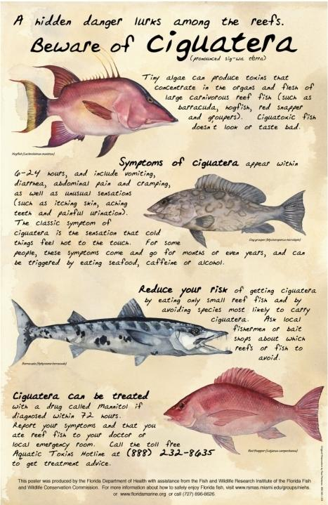Four most wanted: A poster from Florida's Department of Health warns about the dangers of ciguatera in some tropical fish.