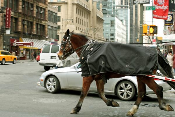 A carriage horse clops through traffic down 55th Street in Manhattan. Drivers say many of the horses came from abusive situations.