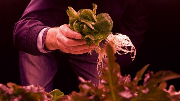 Zero Carbon Food is growing leafy greens, herbs and microgreens in a World War II bomb shelter in London.