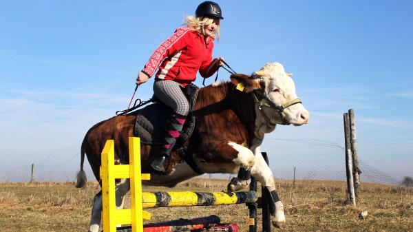"<strong>Not quite jumping over the moon but ... :</strong> An animal<a href=""http://www.telegraph.co.uk/news/newsvideo/weirdnewsvideo/8429563/Luna-the-showjumping-cow.html""> named Luna</a> (get it?) jumps over an obstacle with rider<strong> </strong>Regina Mayer on her back in the Bavarian town of Traunstein, in southern Germany."