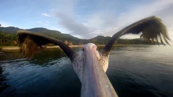 A peli-cam captures the flight of a bird on Tanzania's Lake Tanganyika.