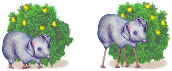 Current-day Wilkies (right) and ancestral Wilkies (left), fictional creatures from a study by Kelemen et al. (2014).