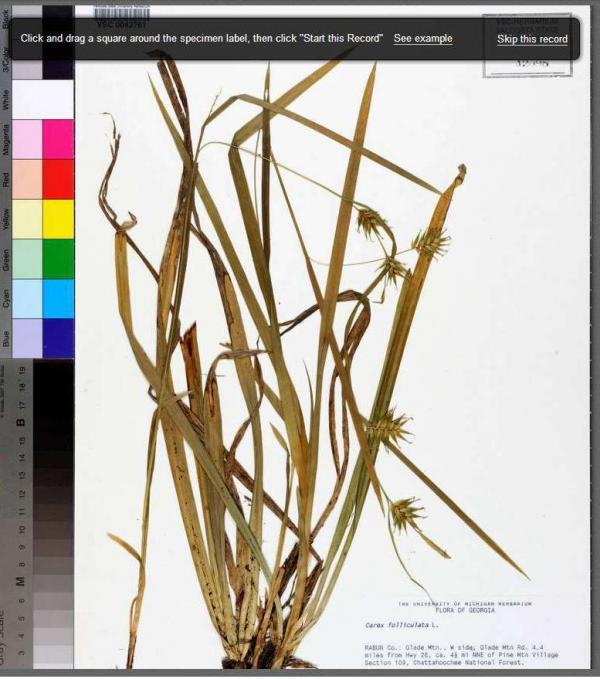 Non-scientists help university researchers catalog thousands of specimens, like this one from Florida State University's herbarium.