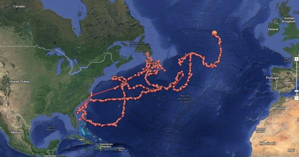 """Lydia,"" a great white shark, has traveled about 19,000 miles in the past year or so. The dots track her route."
