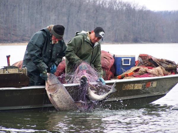 Commercial fisherman Ronnie Hopkins (left) and his assistant, Armondo, catch Asian carp on Lake Barkley, Ky.