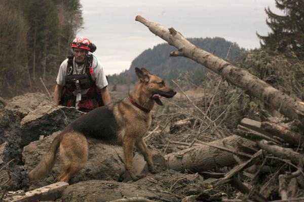 A canine search and rescue team looks for victims in the debris field.