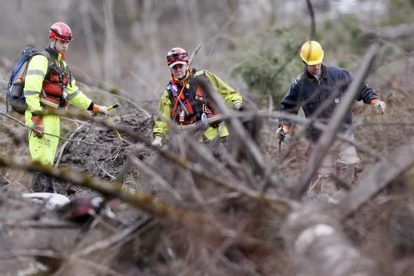 Searchers walk carefully near fallen trees Wednesday at the scene of a deadly mudslide in Oso, Wash. The area was devastated after the mudslide buried dozens of homes and businesses on Saturday.