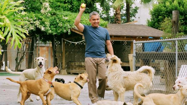 Cesar Millan's television show <em>Dog Whisperer</em> on National Geographic debuted in 2004, but Millan previously spent years struggling to pursue a career as a dog trainer.
