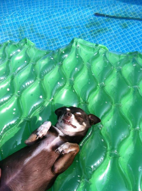 Susan Anderson's dog Koko likes to listen to All Things Considered on 89.3 WRKF while lounging in the pool.
