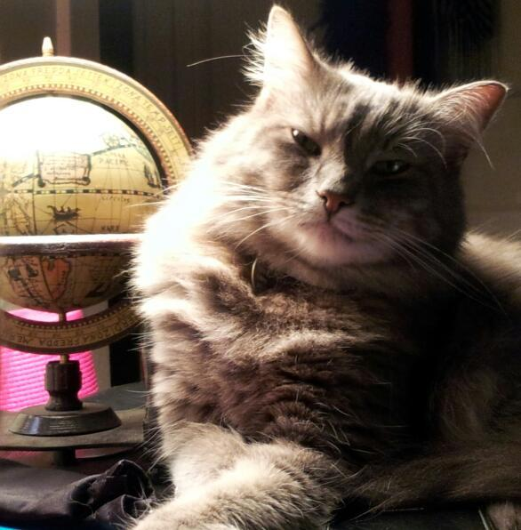 D'Artagnan loves listening to his mom, Ashley Westerman, host Morning Edition on WRKF. He considers himself a worldly, well-informed member of the feline community thanks to all that NPR listening on 89.3 WRKF.