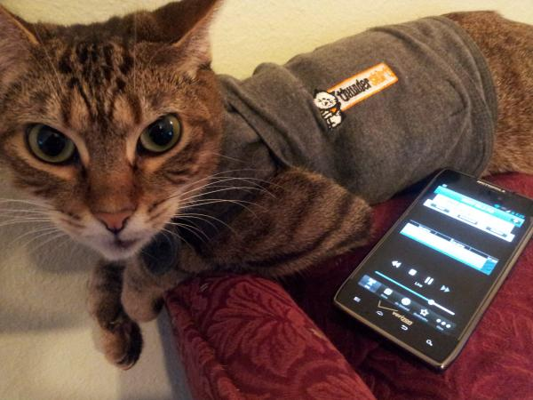 Michael Kleinschmidt's cat, Arizona, uses All Things Considered - along with her Thunder Shirt - to help her relax during afternoon rainstorms. She likes to listen via the WRKF mobile app on his cell phone.