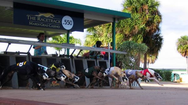 Greyhound racing has been on a downward trend for decades.