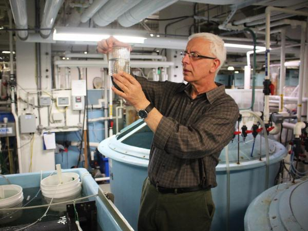Yoni Zohar inspects fish larvae in his laboratory in downtown Baltimore.