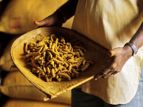 The spice comes from a golden-yellow root native to India.