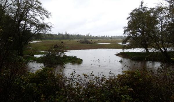 A restoration project last year allowed this wetland to flood while an infamous stretch of Highway 101 stayed dry this winter.