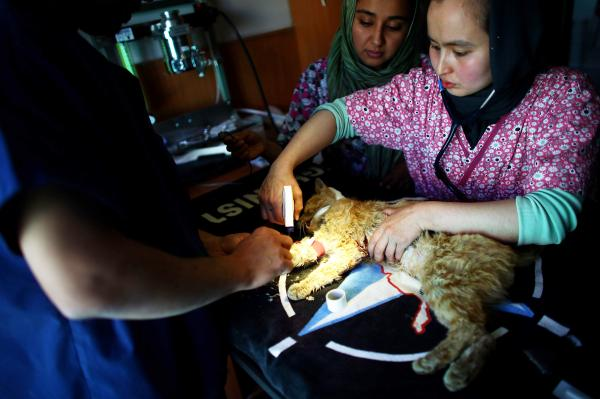 Dr. Abdullah Hadi (left) and Dr. Mahalia (right) prepare to operate on an injured stray cat in the medical facility of Nowzad Dogs.