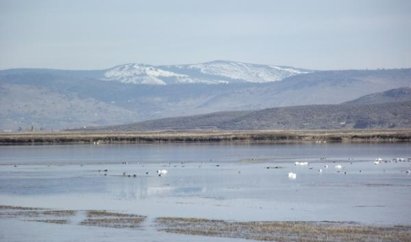 A wildlife refuge in the Klamath Basin. Drought conditions can limit the amount of water that reaches refuges like this one.