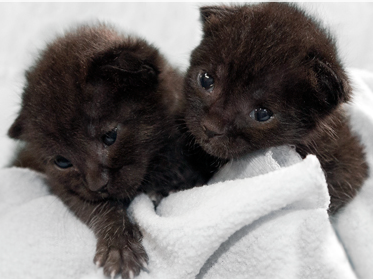 After a pretty long trip for two little kittens, they're safe and sound in San Diego.