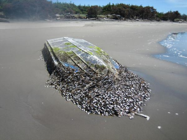 Notice the resemblance the newly arrived skiff has to this boat, which washed ashore close by in 2012. It was later confirmed as tsunami debris from Japan.