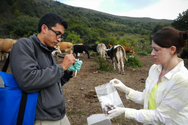 Disease detective Neil Vora of the Centers for Disease Control and Prevention looks for the new smallpox-like virus in Georgian cattle.