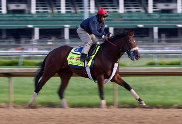 Wicked Strong runs on the track during the morning training for the Kentucky Derby at Churchill Downs on May 1, 2014 in Louisville, Kentucky. (Andy Lyons/Getty Images)